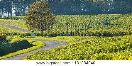 Champagne vineyards in the Cote des Bar area of the Aube department near to Celles sur Ource Champagne-Ardennes, France, Europe