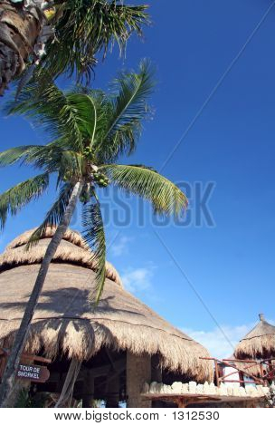 Palm Trees  Beach Huts