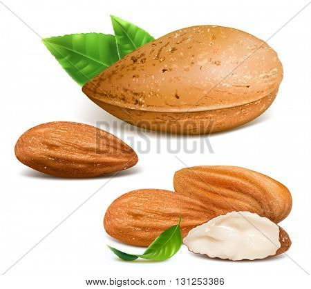 Vector illustration of almonds. Fully editable handmade mesh.