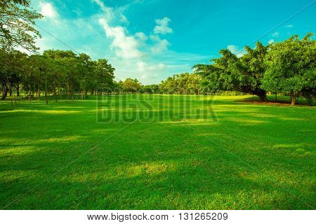 beautiful green grass field and fresh plant in vibrant meadow against white cloud on blue sky use as natural summer season