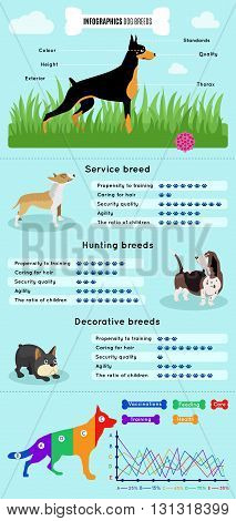 Dogs breed infographics types of dog breeds difference between them advantages and disadvantages percentage ratio and schedule vector illustration