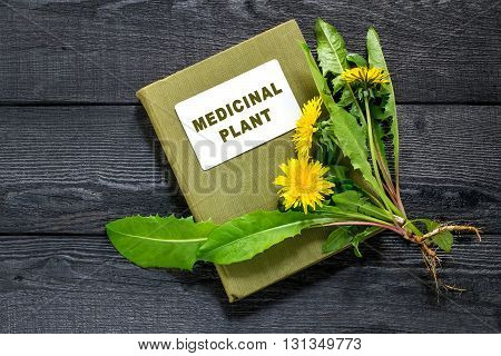 Medicinal plant dandelion (Taraxacum officinale) and herbalist handbook on the old wooden table. Dandelion - edible plant and nectariferous