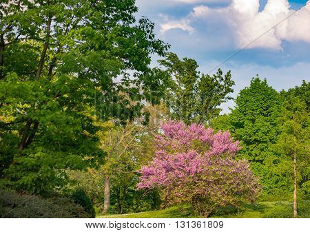 Blossoming bush in park on a sunny day in Germany