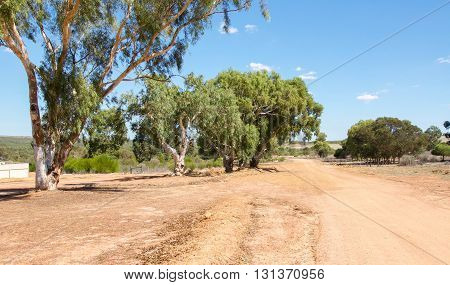 Sandy roadway in diminishing perspective in the peaceful Western Australian farmland with native trees under a blue sky.