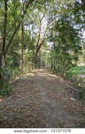 walkway nature in country Nakhon nayok , Thailand