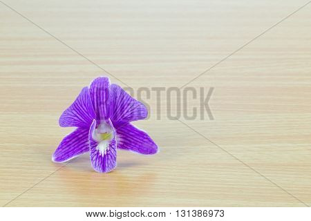 Purple dendrobium orchid flower on wooden panel