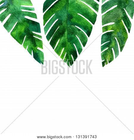 background with watercolor green leaves of palm tree, exotic leaves, tropical nature background, hand drawn watercolor background