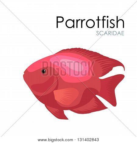 Cute Aquarium fish Parrotfish vector illustration isolated on white background. vector illustration icon. Fish flat style vector illustration. Fish icons isolated. Tropical fish, sea fish, aquarium fish set isolated on white background. Sea color flat des