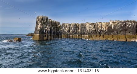 Cliffs Of Farne Islands