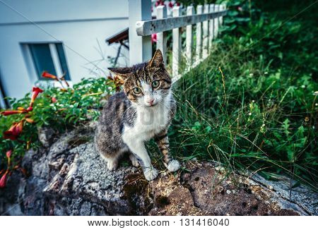 small cat looking at camera in Sarajevo Bosnia and Herzegovina