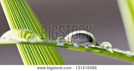Close up of big rain drops on plam leaf