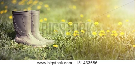 Website banner of wellington boots in spring with dandelion flowers