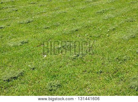 Fresh Mown Grass