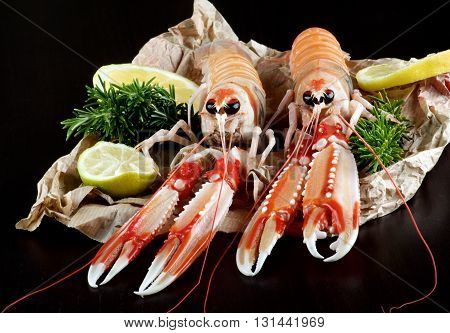 Two Big Raw Langoustines with Lime Lemons Slices and Rosemary on Parchment Paper closeup on Black Wooden background