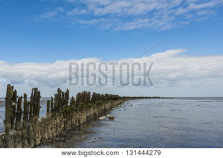 Coastline of the Waddensea at Friesland with mud flats and protection poles and dikes.