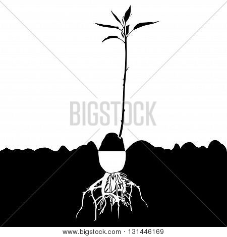 Illustration silhouette of avocado plants in the germination stage.