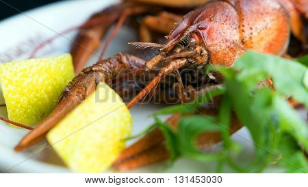 Red boiled crawfish on a plate with lemon and herb