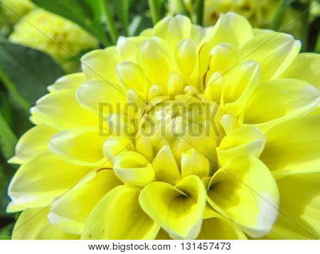 Close up of a yellow flower with petals