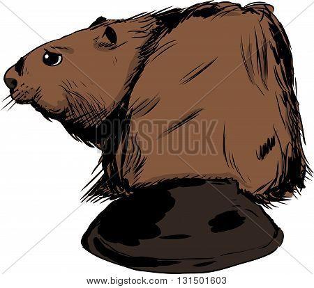 Brown Beaver Illustration