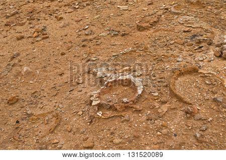 Closeup of hollow tubes of limestone, petrified trunk rocks at Petrified Forest Walk, Cape Bridgewater in Victoria, Australia