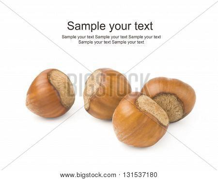 Hazelnut or filbert nut isolated on white background