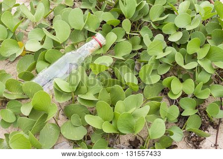 Ipomoea Pes-caprae Plant Or Goat's Foot Creeper With The Bottle , Save The Earth Concept Backgroud