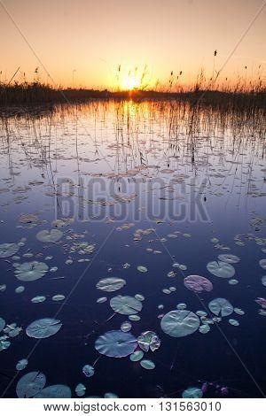 Dramatic landscape of the Okavango Delta Sunset