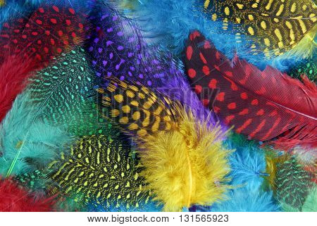 close up of the color feather background