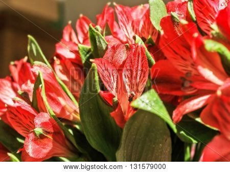 Nice bright bouquet of red alstromeria for happy