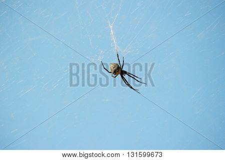 Spider on a spider web with a blue background