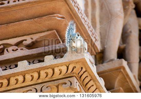 Grey squirrel on a Khajuraho temple India