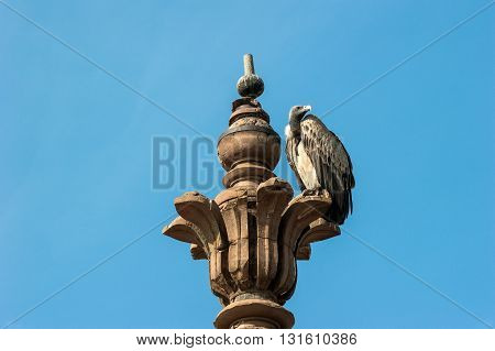 Indian Vulture on blue sky background, Orchha