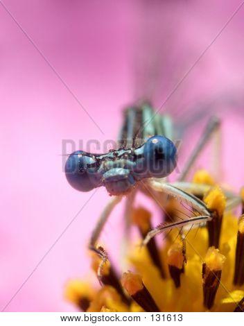 Dragon Fly ...(3)
