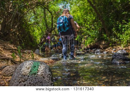 Group Of Backpackers Fording Stream In The Forest