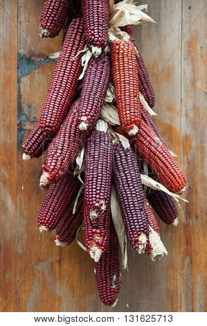 COLORFUL CLOSE UP OF HANGING RED CORN COBS