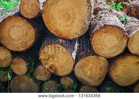 Woodpile from big logs - Background And Texture