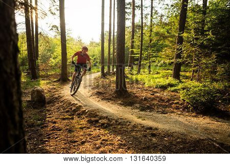 Mountain biker riding on bike in spring inspirational forest sunset landscape. Man cycling MTB on enduro trail path. Sport fitness motivation and summer inspiration. Rider mountain biking in woods. poster