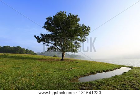 Beautiful alone tree in fog, blue sky and lake