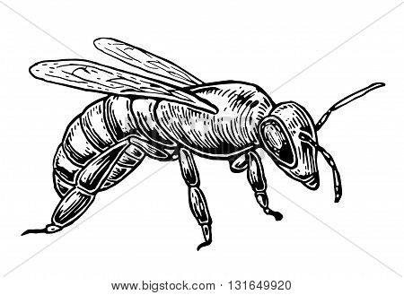 Bee. Isolated vector illustration on white background. Honey bee.