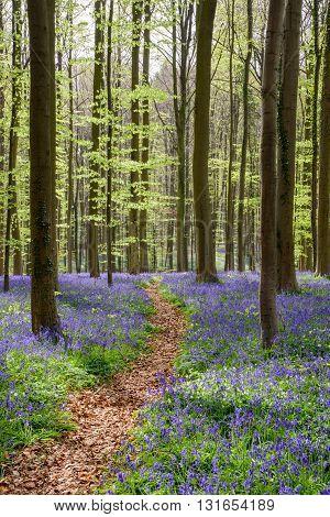 Springtime Blue Beach Forest (5)
