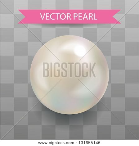 Vector pearl. Realistic Pearl. Transparent Background Illustration