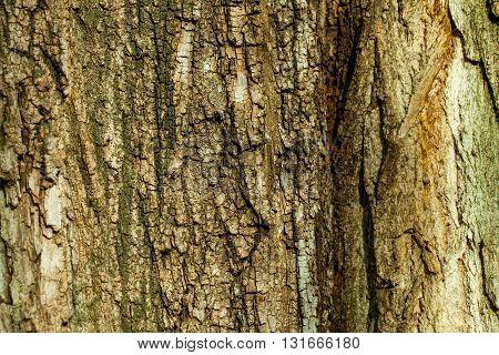 Old Wood Tree Bark