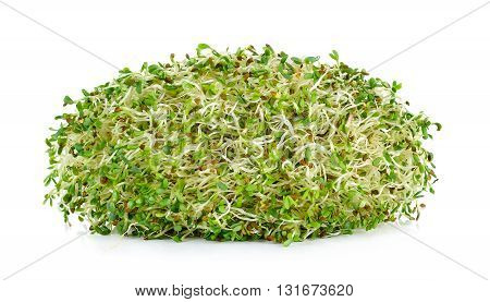 Alfalfa Sprouts Isolated On White Background