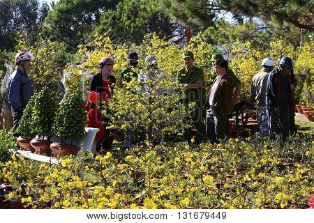 Dalat, Vietnam, February 3,2016: People buying Hoa Mai tree (Ochna Integerrima) flower, for decoration house in traditional lunar new year in Vietnam