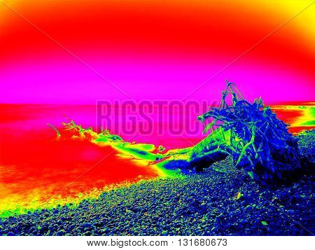 Thermography Measurement Of Ultra Violet Light. Bended Branches Above Warm Sea