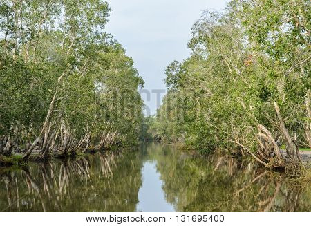 Beautiful green nature view of white samet tree with reflection at Talay-Noi Wetland in Phattalung province Thailand