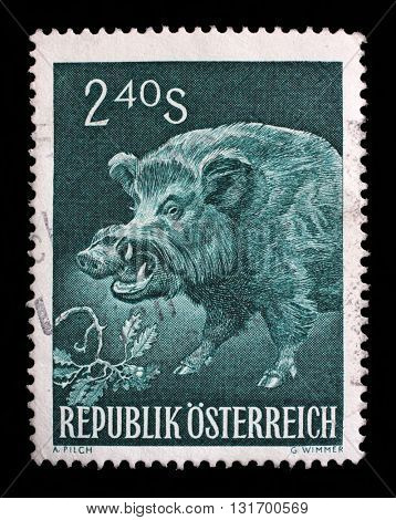 ZAGREB, CROATIA - SEPTEMBER 09: a stamp printed in the Austria shows Wild Boar, Sus Scrofa, Wild Pig, Wild Animal, circa 1959, on September 09, 2014, Zagreb, Croatia