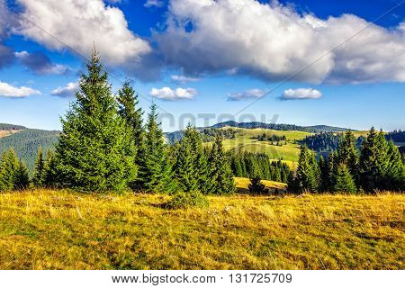 Conifer Forest In Classic Carpathian Mountain Autumn Landscape