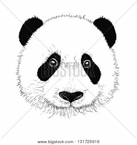 Baby panda face icon. Baby panda. Asian bear. Cute panda. Positive panda. Isolated panda head on white background. Panda head silhouette
