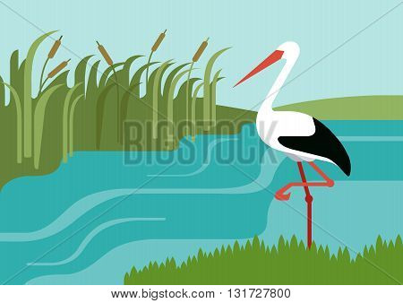 Stork river reeds flat design cartoon vector wild animals birds